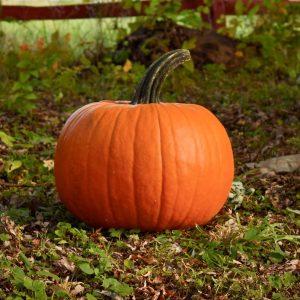 Aladdin Pumpkin