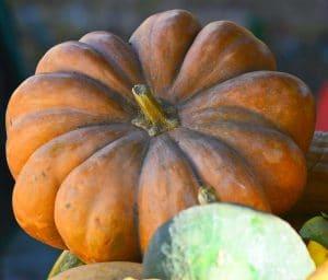 Fairy Tale Pumpkin also called Musquee de Provence
